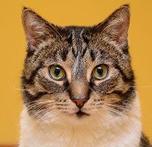 Cat Care at Pet Care Veterinary Hospital