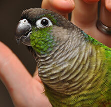 Bird Care at Pet Care Veterinary Hospital