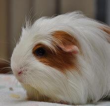 Pocket Pet Care at Pet Care Veterinary Hospital