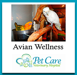 Read about Avian Wellness here