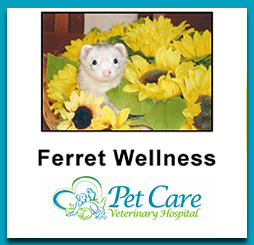 Read about Ferret Wellness here
