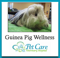 Read about Guinea Pig Wellness here