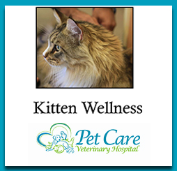 Read about Kitten Wellness here
