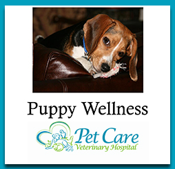 Read about Puppy Wellness here
