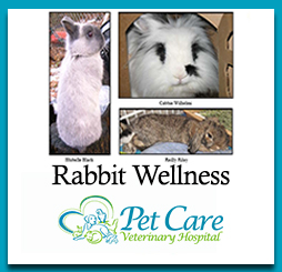 Read about Rabbit Wellness here