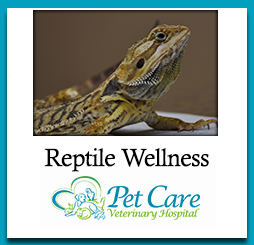 Read about Reptile Wellness here