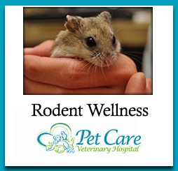 Read about Rodent Wellness here