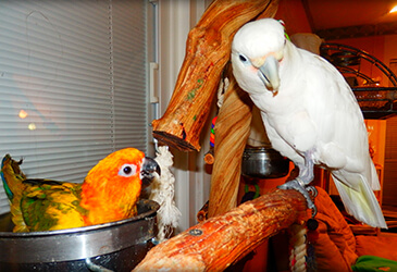 Avian bornavirus
