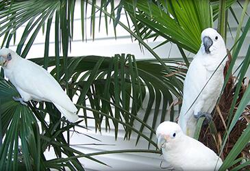 Bird Veterinarian Virginia Beach