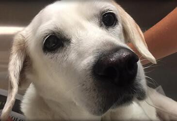 Dog Veterinarian Virginia Beach