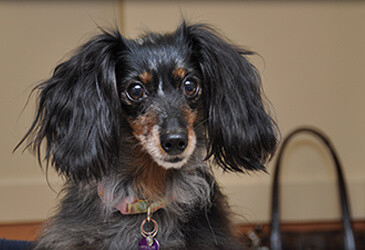 Pet Care Virginia Beach has provided some Fequently Asked Questions for you