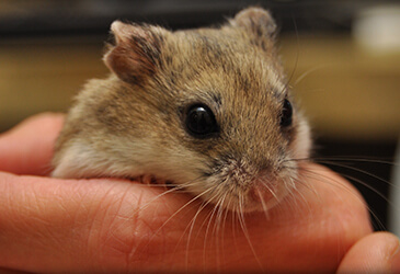 Gerbils Veterinarian Virginia Beach