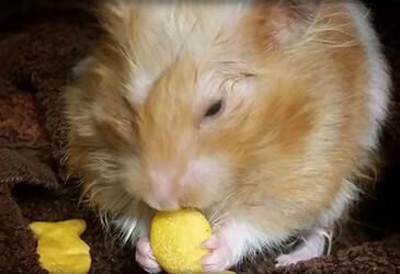 Hamster Veterinarian Virginia Beach