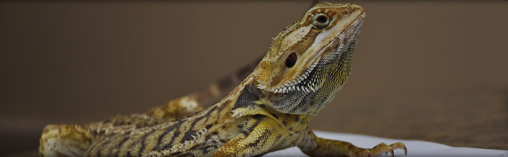 Reptile Veterinarian Virginia Beach