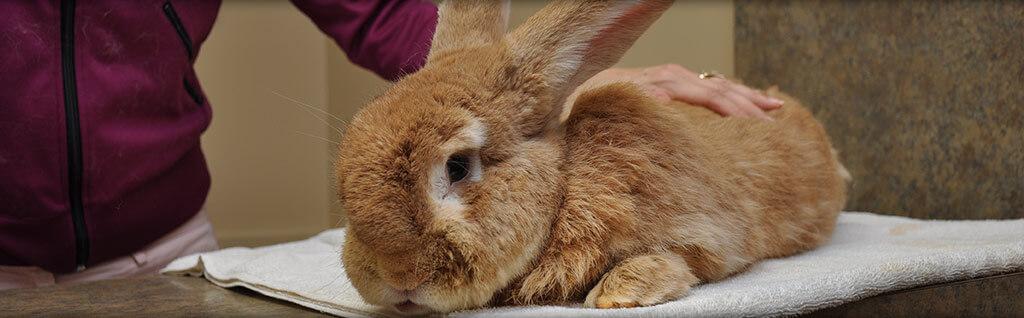 Rabbit Veterinarian Virginia Beach