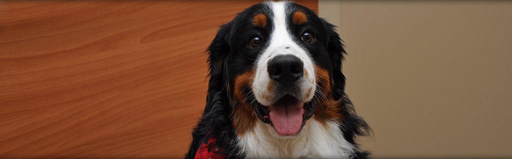 Canine Veterinarian Virginia Beach