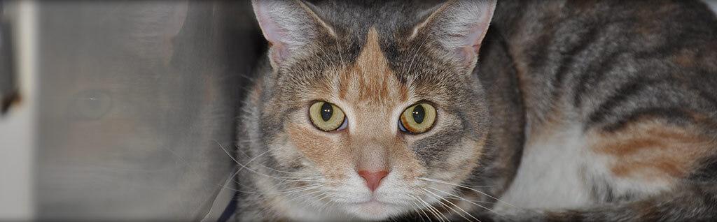 Feline Veterinarian Virginia Beach