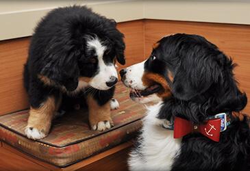 Pet Library for Pet Care Virginia Beach