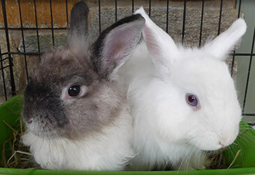 Rabbit Veterinarian Virginia Beach