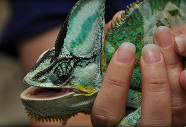 Reptile Veterinarian at Pet Care Virginia Beach
