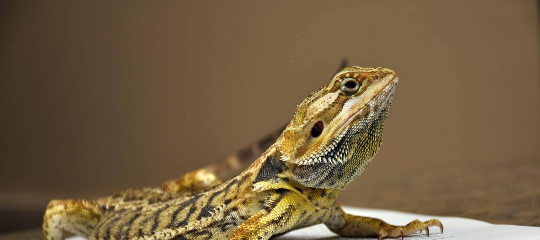 Reptile Veterinarians in Virginia Beach VA